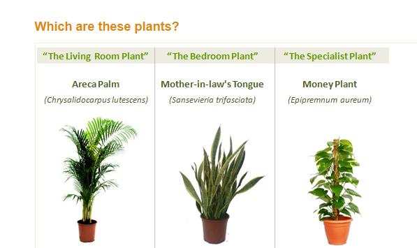 هوای پاک با گیاه